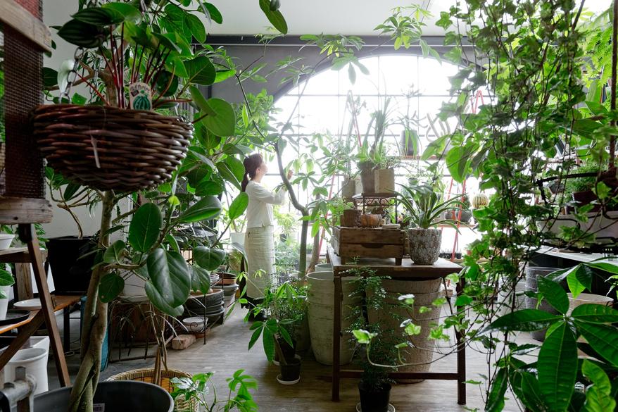 観葉植物cotoha
